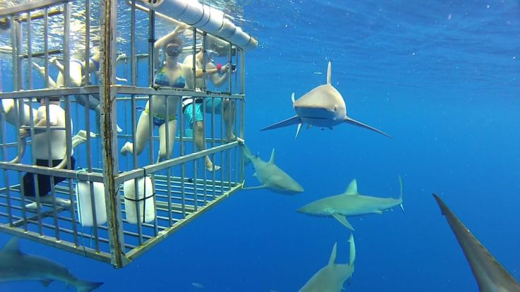 Sharks_outside_cage.jpg